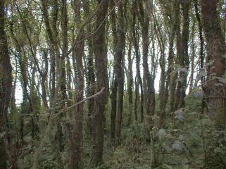 Dense Woods Andrewhugill